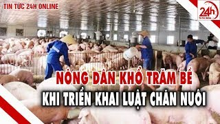 Triển khai Luật Chăn nuôi Nông dân trăm bề khổ | Tin tức Việt Nam mới nhất | Cuộc sống Nhà nông