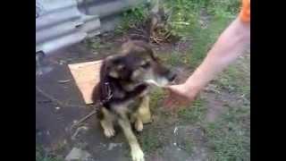 Собака bboy Мухтар (Курск) :DDDDDDDD