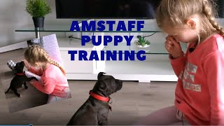 How to train an 8week old American Staffordshire puppy  basic commands