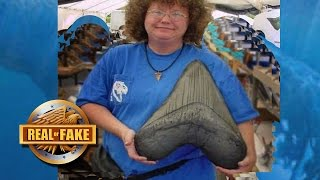 WORLD'S BIGGEST MEGALODON TOOTH FOUND - real or fake?
