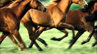 horses galloping - sound effect