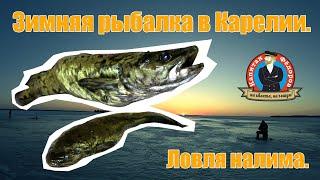 Зимняя рыбалка в Карелии Ловля налима капитанандрейфёдоров зимняярыбалка видеоорыбалке