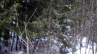 Trail XL VS. FOX VS. Birch Sapling Thumbnail