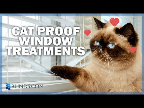 Best Window Treatments For Cat Owners | Blinds.com
