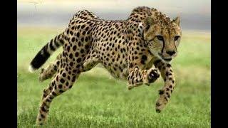 TOP 3 Najrýchlejšie zvieratá 9dada816fc0