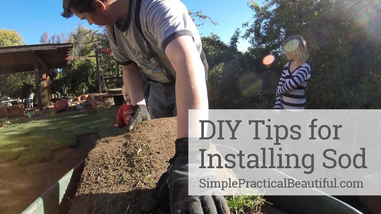 Diy Sod Extreme Gardening Diy Tips For Installing Sod Youtube