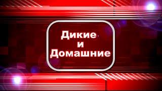 """""""Дикие и Домашние"""": Гостья студии Инга Блинникова о своих собаках"""