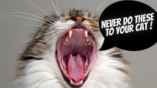 15 things you must never do to your cat