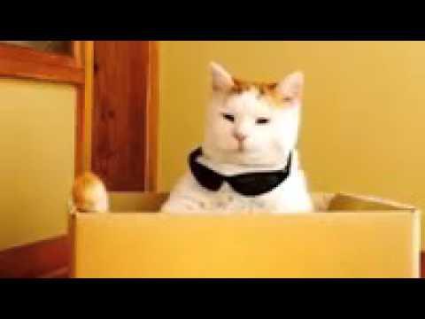 7c4f081e3597b Gato engraçado coloca óculos de sol - YouTube