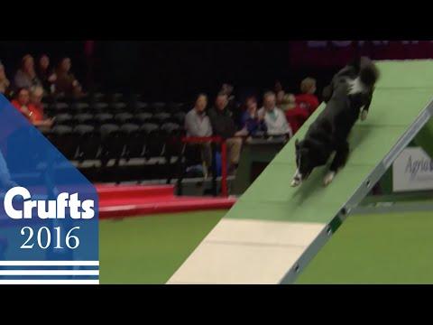 Agility - Kennel Club Novice Cup Final - Agility | Crufts 2016