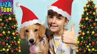 Наряжаем елку Первая реакция щенка Таффи на елку и игрушки Первый новый год моей собаки