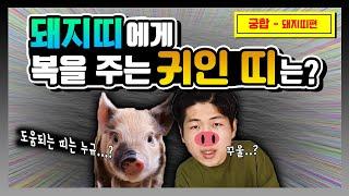 돼지띠에게 좋은 띠는? Feat 돼지띠 띠궁합
