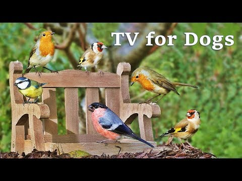 Videos for Dogs to Watch Garden Birds : Calm Your Dog - TV for Dogs Spectacular ✅