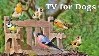 Dog Watch TV Spectacular  Videos for Dogs to Watch Garden Birds ✅