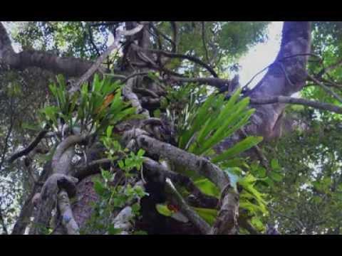 Earth Keeper, Star Walker 6 Day Spiritual Retreat, Solitude, Queensland April 2014