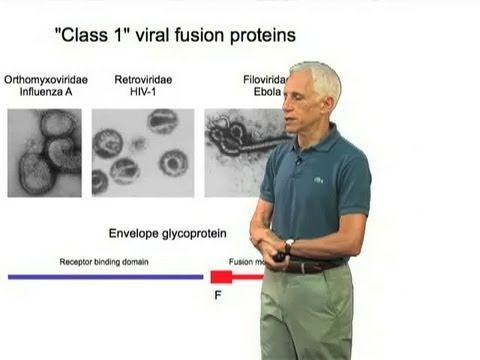 Class 1 viral fusion proteins - Stephen Harrison (Harvard/HHMI)