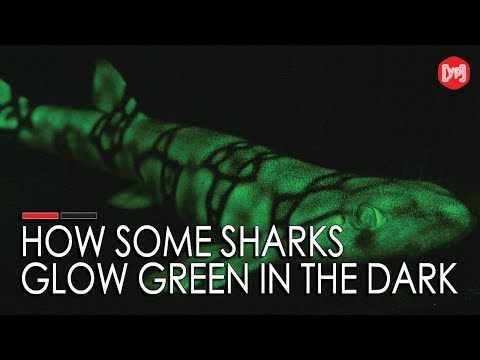 How some sharks glow green in the dark