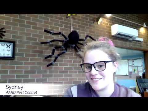 Pest Control/Exterminator Marketing Success Story