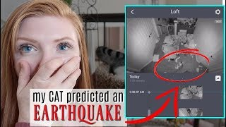 2AM SECURITY CAMERA VIDEO - my cat predicted an earthquake
