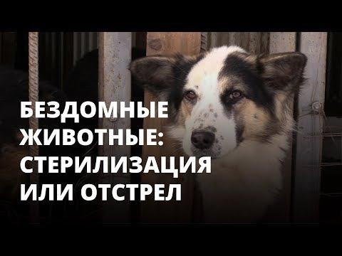 В Саратове начали истреблять бездомных собак