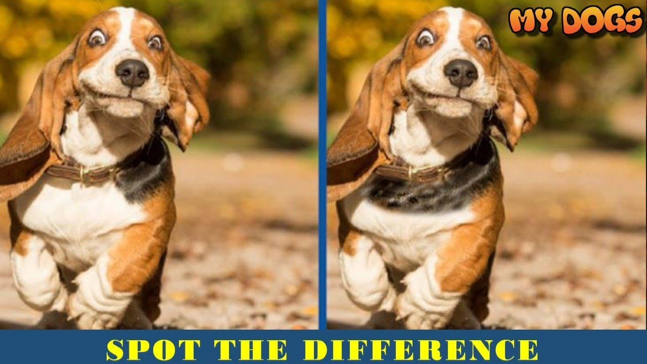 Find The Difference Dog | Spot The Difference | Can You Find All Difference  In 15S?PT 1