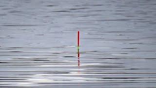 БЕШЕННЫЙ КЛЕВ ПЛОТВЫ Рыбалка на ПОПЛАВОК Река СИТЬ РЫБИНКА 4 05 2021