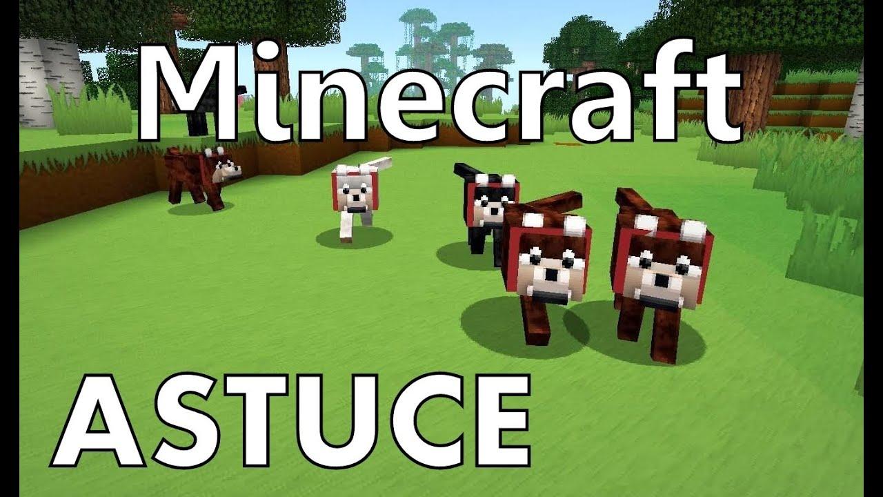 Minecraft : Chien