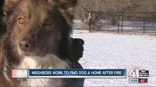 Dog Rescued From Fire Needs New Home