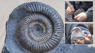 Cracking Open an Ammonite Nodule
