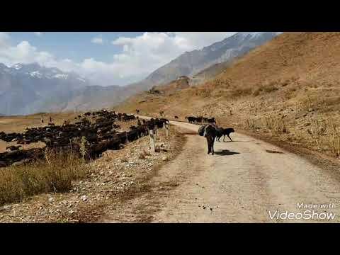 видео: Гиссарские овцы и саги дахмарда Ходжи Наима Мирзорахимова