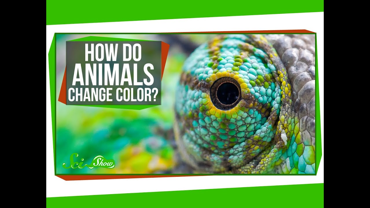 How Do Animals Change Color? - YouTube