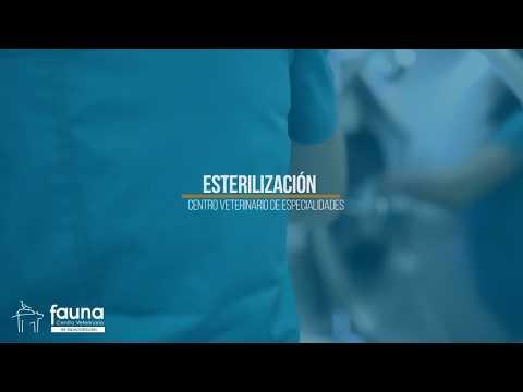 Esterilización en Fauna Centro Veterinario de Especialidades