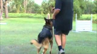 K9 Perfection - The Art Of Dog Training