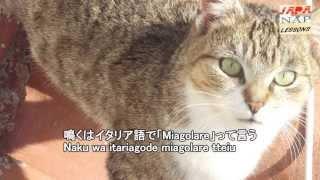 #comesidicegatto in giapponese :)