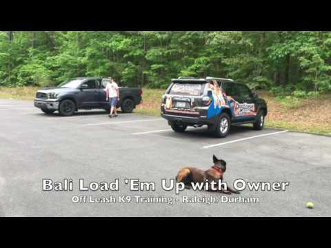 "7.5mo Belgian Malinois ""Bali"" Before and After Video - Amazing Dog Training Raleigh Durham"