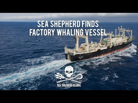 Operation Nemesis: Sea Shepherd Finds Factory Whaling Vessel
