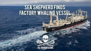 Operation Nemesis: Sea Shepherd Finds Factory Whaling Vessel