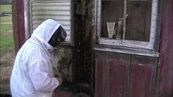 University Of Louisiana At Lafayette Bee Removal