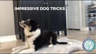 SeeWhatSheCanDo Women & Dogs Impressive Dog Tricks