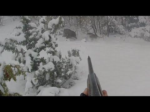 Harika Bir Domuz Avı Kastamonu Perfect Action Wild Boar Hunting Full Aksiyon Heyecan Sayısız Domuz