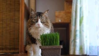 草食系ボス猫