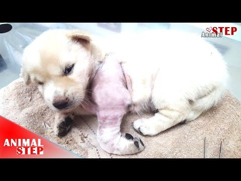 Poorest Puppies Lived in Suffering Since They're Born – They're Having Hope After Being Rescued