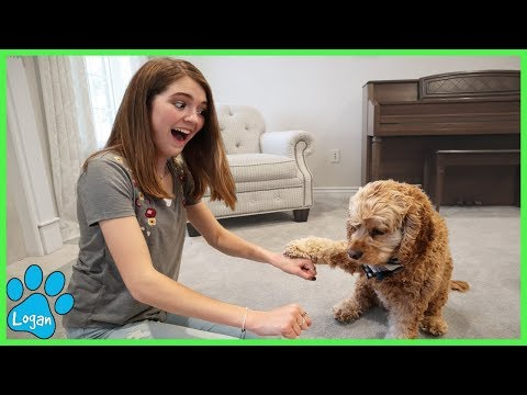 Which Hand Is It? Cute Dog Plays Guessing Game / Logan The Adventure Dog