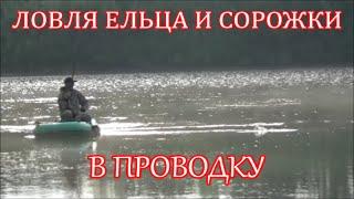 Ловля ельца и сорожки, в проводку с лодки на течении