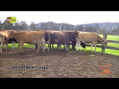 2015: HEMBRAS DE LEVANTE TIPO LECHE, PESO PROM/ANIMAL  247.5 KG TENJO-CUNDINAMARCA, L-0340