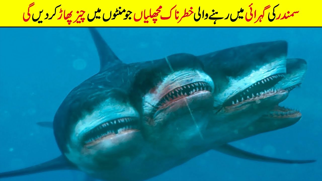 Most Rare Shark Species Hidden in The Ocean