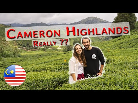 I Can't Believe this is in Malaysia - Cameron Highlands
