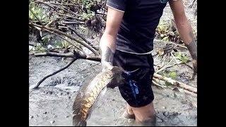 Fish hunting পুকুর সেচে মাছ ধরা Mud water fishing by only hand