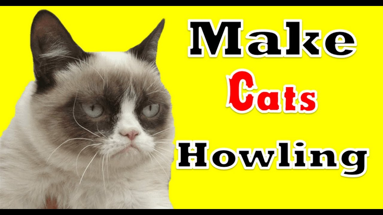 Guaranteed Make Your Cats Howling Unhappy Scream Angry Cats Meow Sound Effects Youtube