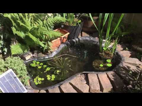 Goldfish Pond With Solar Pumps - Update